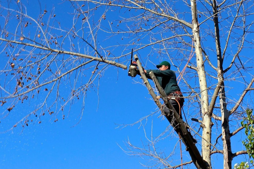 Contact Us-Opa Locka FL Tree Trimming and Stump Grinding Services-We Offer Tree Trimming Services, Tree Removal, Tree Pruning, Tree Cutting, Residential and Commercial Tree Trimming Services, Storm Damage, Emergency Tree Removal, Land Clearing, Tree Companies, Tree Care Service, Stump Grinding, and we're the Best Tree Trimming Company Near You Guaranteed!