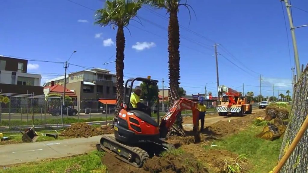 Palm Tree Removal-Opa Locka FL Tree Trimming and Stump Grinding Services-We Offer Tree Trimming Services, Tree Removal, Tree Pruning, Tree Cutting, Residential and Commercial Tree Trimming Services, Storm Damage, Emergency Tree Removal, Land Clearing, Tree Companies, Tree Care Service, Stump Grinding, and we're the Best Tree Trimming Company Near You Guaranteed!