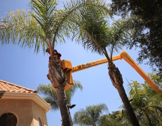 Palm Tree Trimming-Opa Locka FL Tree Trimming and Stump Grinding Services-We Offer Tree Trimming Services, Tree Removal, Tree Pruning, Tree Cutting, Residential and Commercial Tree Trimming Services, Storm Damage, Emergency Tree Removal, Land Clearing, Tree Companies, Tree Care Service, Stump Grinding, and we're the Best Tree Trimming Company Near You Guaranteed!