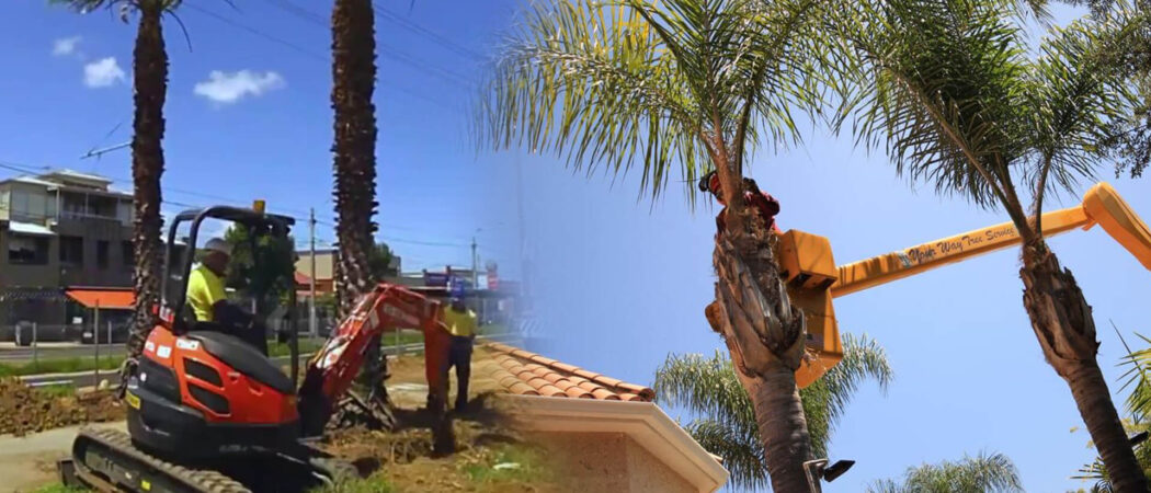Palm tree trimming & palm tree removal-Opa Locka FL Tree Trimming and Stump Grinding Services-We Offer Tree Trimming Services, Tree Removal, Tree Pruning, Tree Cutting, Residential and Commercial Tree Trimming Services, Storm Damage, Emergency Tree Removal, Land Clearing, Tree Companies, Tree Care Service, Stump Grinding, and we're the Best Tree Trimming Company Near You Guaranteed!