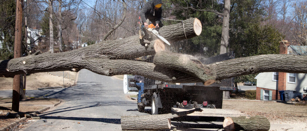 Residential Tree Services-Opa Locka FL Tree Trimming and Stump Grinding Services-We Offer Tree Trimming Services, Tree Removal, Tree Pruning, Tree Cutting, Residential and Commercial Tree Trimming Services, Storm Damage, Emergency Tree Removal, Land Clearing, Tree Companies, Tree Care Service, Stump Grinding, and we're the Best Tree Trimming Company Near You Guaranteed!