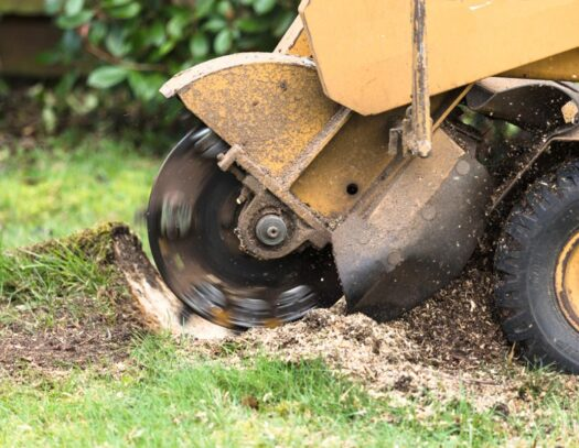 Stump Grinding-Opa Locka FL Tree Trimming and Stump Grinding Services-We Offer Tree Trimming Services, Tree Removal, Tree Pruning, Tree Cutting, Residential and Commercial Tree Trimming Services, Storm Damage, Emergency Tree Removal, Land Clearing, Tree Companies, Tree Care Service, Stump Grinding, and we're the Best Tree Trimming Company Near You Guaranteed!