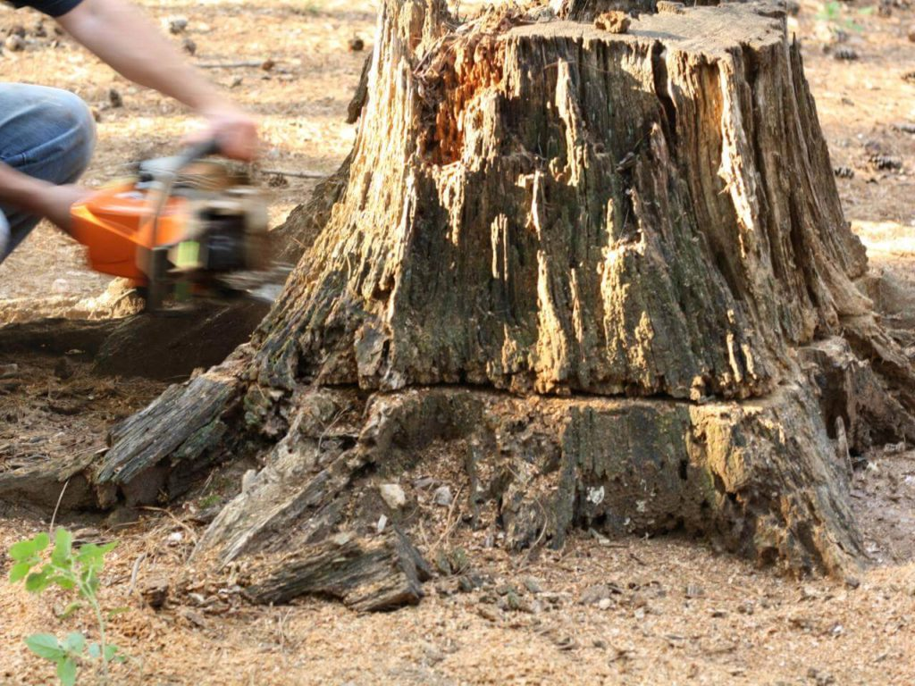 Stump Removal-Opa Locka FL Tree Trimming and Stump Grinding Services-We Offer Tree Trimming Services, Tree Removal, Tree Pruning, Tree Cutting, Residential and Commercial Tree Trimming Services, Storm Damage, Emergency Tree Removal, Land Clearing, Tree Companies, Tree Care Service, Stump Grinding, and we're the Best Tree Trimming Company Near You Guaranteed!