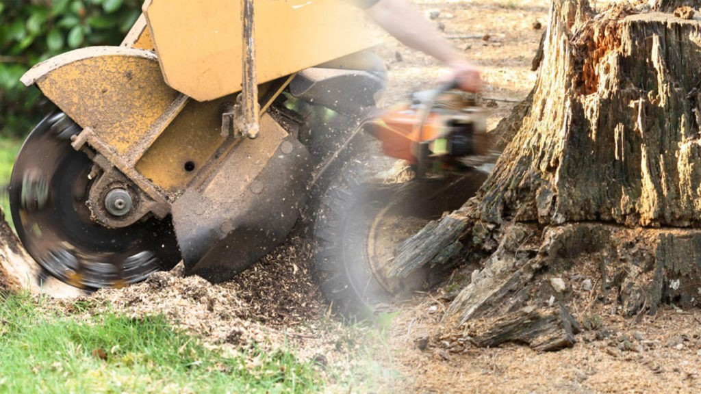 Stump grinding & removal-Opa Locka FL Tree Trimming and Stump Grinding Services-We Offer Tree Trimming Services, Tree Removal, Tree Pruning, Tree Cutting, Residential and Commercial Tree Trimming Services, Storm Damage, Emergency Tree Removal, Land Clearing, Tree Companies, Tree Care Service, Stump Grinding, and we're the Best Tree Trimming Company Near You Guaranteed!