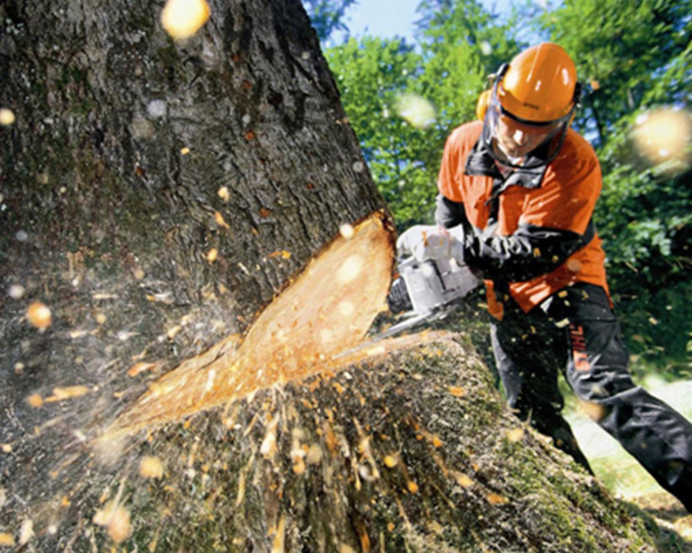 Tree Cutting-Opa Locka FL Tree Trimming and Stump Grinding Services-We Offer Tree Trimming Services, Tree Removal, Tree Pruning, Tree Cutting, Residential and Commercial Tree Trimming Services, Storm Damage, Emergency Tree Removal, Land Clearing, Tree Companies, Tree Care Service, Stump Grinding, and we're the Best Tree Trimming Company Near You Guaranteed!