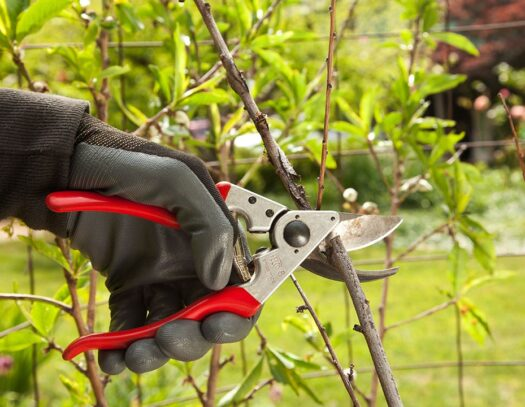 Tree Pruning-Opa Locka FL Tree Trimming and Stump Grinding Services-We Offer Tree Trimming Services, Tree Removal, Tree Pruning, Tree Cutting, Residential and Commercial Tree Trimming Services, Storm Damage, Emergency Tree Removal, Land Clearing, Tree Companies, Tree Care Service, Stump Grinding, and we're the Best Tree Trimming Company Near You Guaranteed!