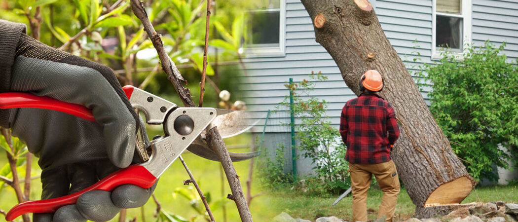 Tree pruning & tree removal-Opa Locka FL Tree Trimming and Stump Grinding Services-We Offer Tree Trimming Services, Tree Removal, Tree Pruning, Tree Cutting, Residential and Commercial Tree Trimming Services, Storm Damage, Emergency Tree Removal, Land Clearing, Tree Companies, Tree Care Service, Stump Grinding, and we're the Best Tree Trimming Company Near You Guaranteed!
